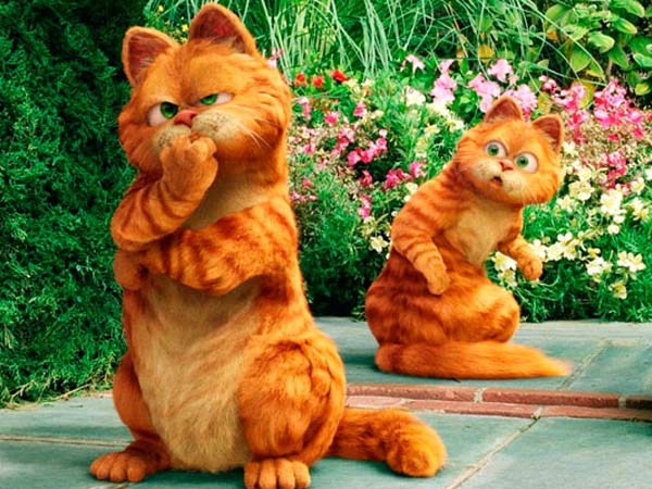 Online Zoznamka bitka mačky